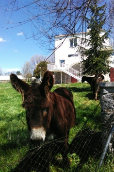 Residencia - Primavera 5